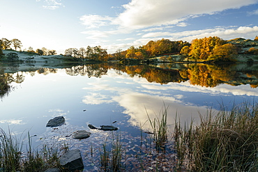 Dawn light at Loughrigg Tarn, Lake District National Park, UNESCO World Heritage Site, Cumbria, England, United Kingdom, Europe
