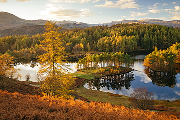 Autumn afternoon light at Tarn Hows, Lake District National Park, UNESCO World Heritage Site, Cumbria, England, United Kingdom, Europe