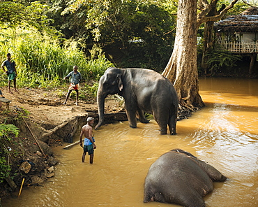 Elephants being washed in river, Sigiriya, Central Province, Sri Lanka, Asia