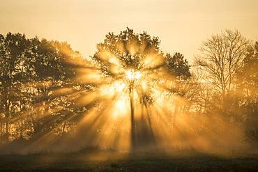 Sunrise over Trees, Les Landes, Nouvelle-Aquitaine, France