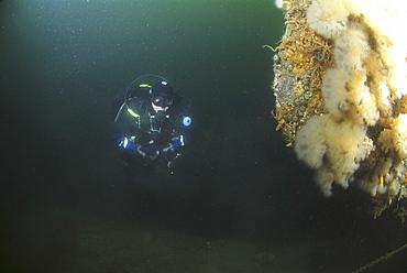 Diver approaches German Battleship, Scapa Flow, Orkney islands, Scotland, UK
