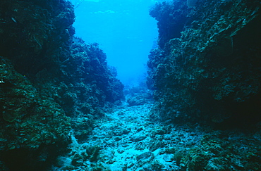 Typical Spur and groove reef formation, Cayman Islands, Caribbean