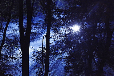 Eerie woods and the English countryside at night, moonlight streaming through trees, England, United Kingdom, Europe