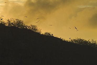 Sunrise over Genovesa. Galapagos.