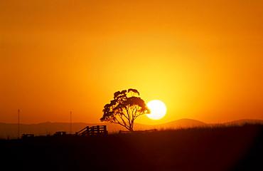Sunset over Brindabella Ranges with Eucalyptus tree and stock yard, Canberra, Australian Capital Territory, Australia - 994-1