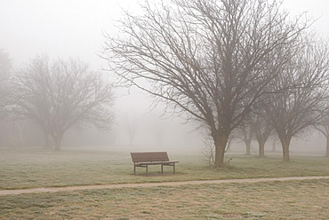 Winter mist in the park, Cultivated, Canberra, Australia - 994-9