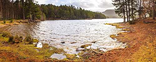 Loch an Eilein and the Rothiemurchus Forest, Aviemore, Cairngorms National Park, Scotland, United Kingdom, Europe