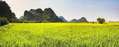 Rice paddy fields at Sadan Cave (aka Saddar Caves), Hpa An, Kayin State (Karen State), Myanmar (Burma), Asia