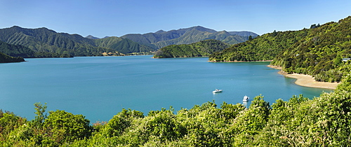 Coastal landscape at Kenepuru Sound, Queen Charlotte Track, Marlborough Sounds, Picton, South Island, New Zealand, Pacific