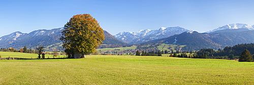 Single tree in Prealps landscape in autumn, Fussen, Ostallgau, Allgau, Allgau Alps, Bavaria, Germany, Europe