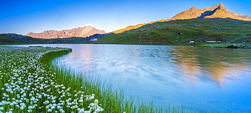 Panoramic of Monte Gavia mirrored in Lago Bianco surrounded by cotton grass, Gavia Pass, Valfurva, Valtellina, Lombardy, Italy, Europe