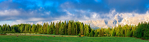 Green woods and pastures of Malga Nemes at sunrise in summer, Sesto (Sexten), Val Pusteria, Sesto Dolomites, South Tyrol, Italy, Europe