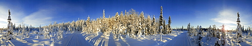 Snow covered trees and track, Kuusamo, Lapland, Finland, Europe