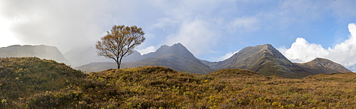 A lone tree and the Cuillins on The Isle of Skye, Inner Hebrides, Scottish Highlands, Scotland, United Kingdom, Europe