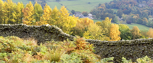 A dry stone wall and autumn colours around Burnsall in Wharfedale, The Yorkshire Dales National Park, Yorkshire, England, United Kingdom, Europe