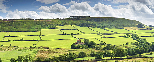 Green fields and heather clad moorland at Little Fryup Dale near Danby, The North Yorkshire Moors National Park, Yorkshire, England, United Kingdom, Europe - 1228-255