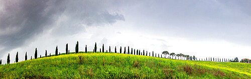 Green landscape with cypress trees and rolling hills, Tuscany.