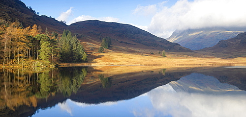 Panoramic Image of autumn colours reflected at Blea Tarn, Langdale Pikes, Lake District National Park, UNESCO World Heritage Site, Cumbria, England, United Kingdom, Europe