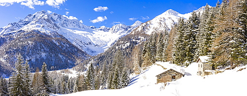 Winter landscape after snowfall with view of the group of Disgrazia, Chiareggio, Valmalenco, Valtellina, Lombardy, Italy, Europe - 1269-667