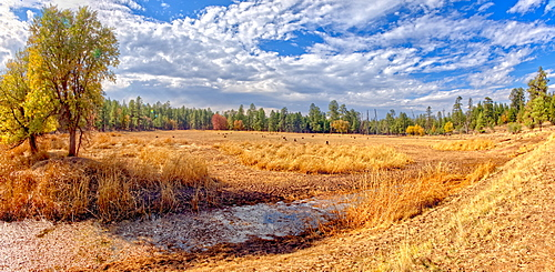 Grassland that used to be the J D Dam Lake, dry due to a drought in Arizona, Kaibab National Forest, south of Williams, Arizona, United States of America, North America
