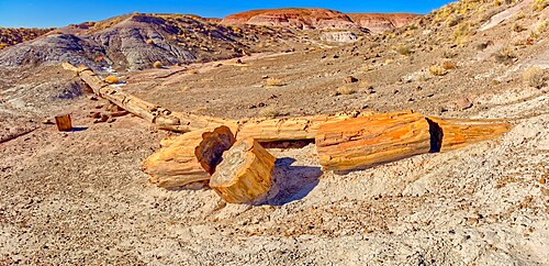 One of the few petrified trees almost intact, The Onyx Bridge in Petrified Forest National Park, Arizona, United States of America, North America