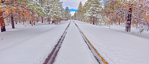 The road leading to Kaibab Lake in the Kaibab National Forest near Williams, Arizona, United States of America, North America