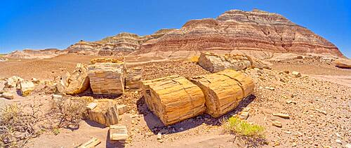 Large pieces of petrified wood on the west side of Red Basin in Petrified Forest National Park Arizona, United States of America, North America