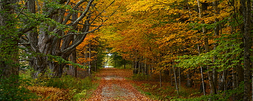 Trails among maple and aspen trees, Maine, New England, United States of America, North America