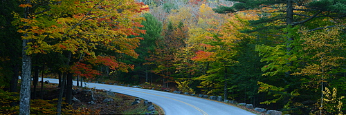 Road among trees with fall foilage, Maine, New England, United States of America, North America
