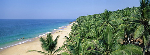 Coconut palms and beach, Kovalam, Kerala state, India, Asia