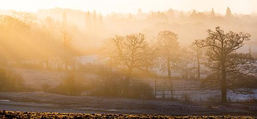 Winter trees in misty panorama, Surrey, England, United Kingdom, Europe