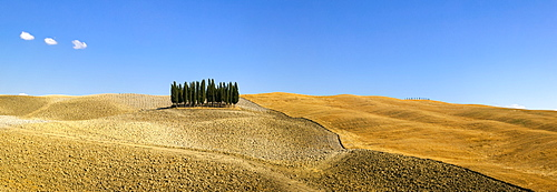 Panorama of group of Cypress trees in the landscape, Val d'Orcia, UNESCO World Heritage Site, Tuscany, Italy, Europe