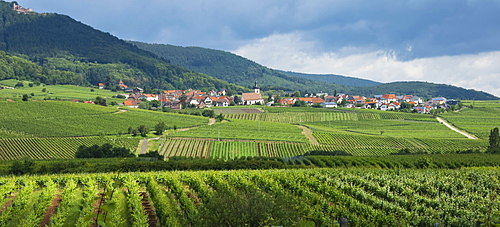 Village in the vineyards, Pfalz area, Rhineland-Palatinate, Germany, Europe