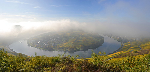 Moselschleife, Kröv, morning light, Rhineland-Palatinate, Germany, Europe