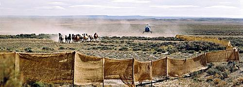 Cowboys drive a herd of horses by helicopter, Wyoming, USA, North America