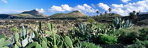 View over the volcanic landscape of Parque Natural de Los Volcanes, La Geria, Lanzarote, Canary Islands, Spain