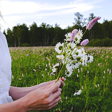 Hands of woman picking wildflowers