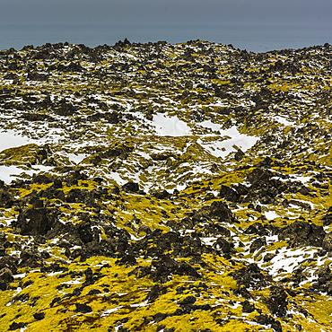 Lava field, Snaefellsnes, Iceland, Polar Regions