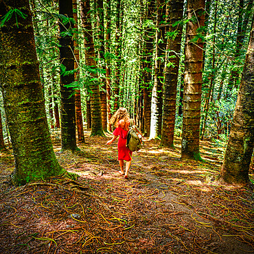 A barefoot woman in a red dress carries a travel pack over her shoulder through a tall forest, Kapaa, Hawaii, United States of America, Pacific
