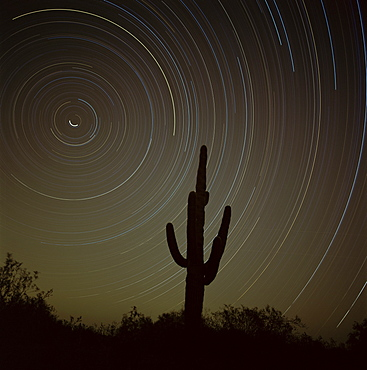 Star tracing over cacti, tracing stars as they move round North Star, Tucson, Arizona, United States of America (U.S.A.), North America