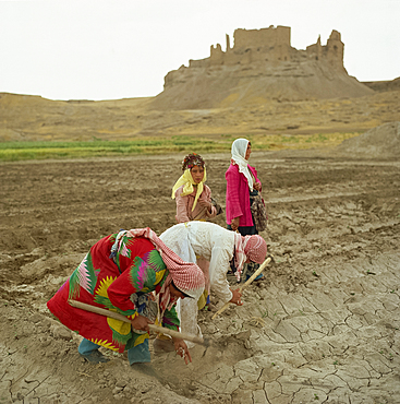 Women working in the fields in the Euphrates Valley, Syria, Middle East - 322-2362
