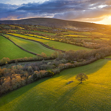 Aerial vista by drone of rolling countryside in evening sunlight, Devon, England, United Kingdom, Europe