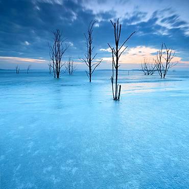 Frozen Lake Geiseltal with dead trees in winter, Muecheln, Saxony-Anhalt, Germany, Europe