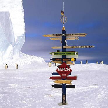 Emperor penguins (Aptenodytes forsteri) walking behind a German Signpost on the ice, Drescher Inlet Iceport, Queen Maud Land Coast, Weddell Sea, Antarctica