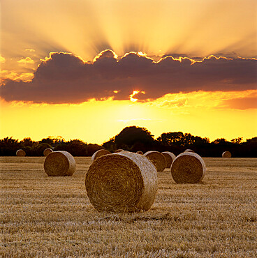 """High Quality Stock Photos of """"bales"""""""