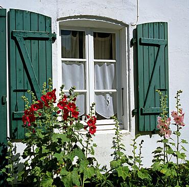 Typical scene of shuttered windows and hollyhocks, St. Martin, Ile de Re, Poitou-Charentes, France, Europe