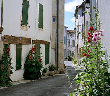 Typical street scene with Hollyhocks, St. Martin, Ile de Re, Poitou-Charentes, France, Europe