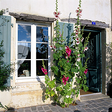 Typical scene of shuttered windows and hollyhocks, St. Martin, Ile de Re, Poitou-Charentes, France, Europe