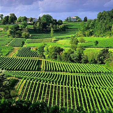 View over vineyards, Saint Emilion, Nouvelle Aquitaine, France, Europe