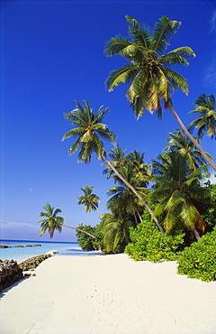 Beach at Nakatchafushi, North Male Atoll, Maldives